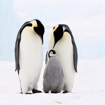 No.16 ペンギンから学ぶ子育て♪